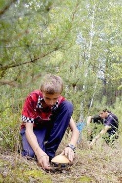 Юный грибник будет в восторге от леса