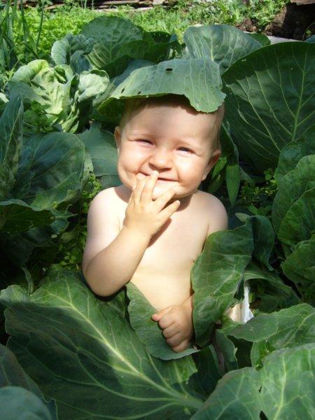 Почему детям полезна капуста