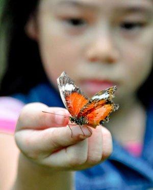 Удивительный мир насекомых глазами ребенка