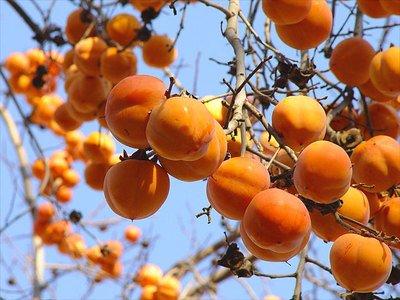 Хурма - оранжевая радость для ребенка